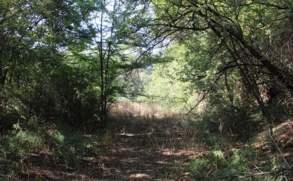 Natural bush