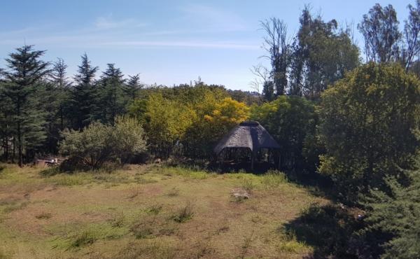 view-over-garden